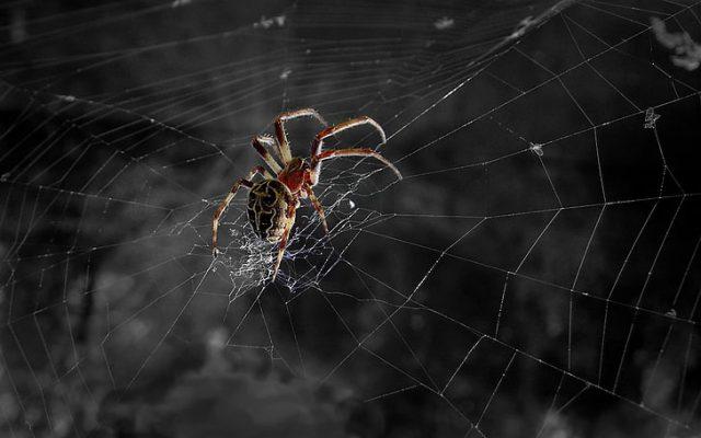 O que significa quando você sonha com aranhas? Não tenha medo