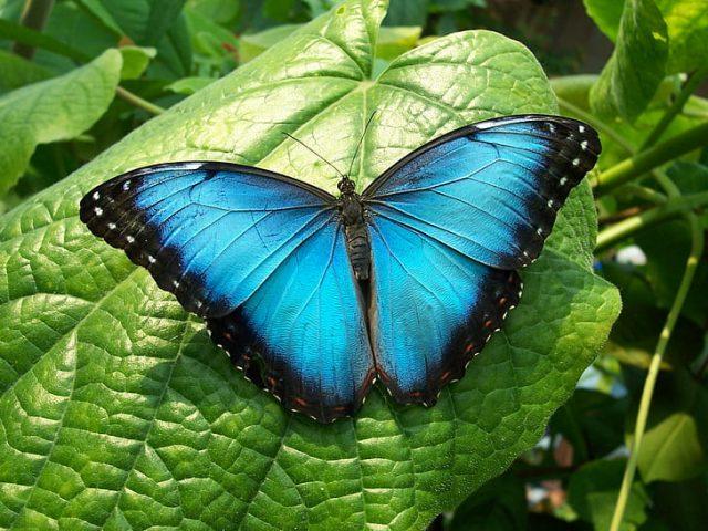 O que significa quando você vê uma borboleta? Significado e simbolismo