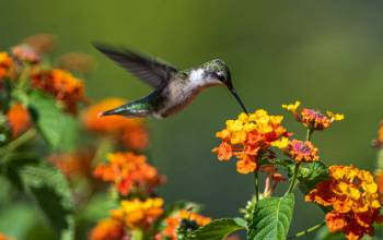 Simbolismo e significado do beija-flor