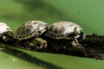 Simbolismo, significado e espírito da tartaruga animal