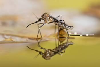 Animal Espírito Mosquito: Seja sempre criativo