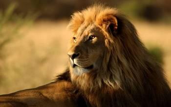 Simbolismo, sonhos e mensagens do leão