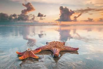 Simbolismo da estrela do mar, totem e significado animal do espírito