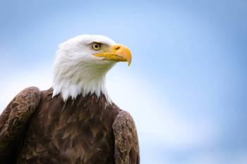 Simbolismo da águia, significado e o animal do espírito da águia