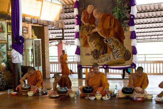 Monks eat breakfast in the temple portion of the Tiger Temple grounds. The Tiger Temple was founded in 1994 as just another monastery.