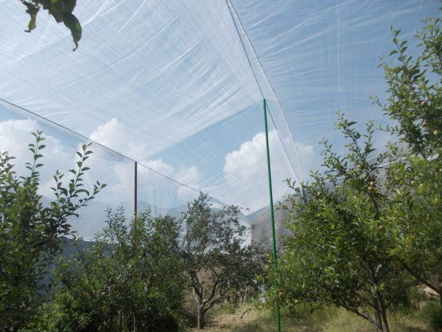Anti Hail Net in Apple Orchard