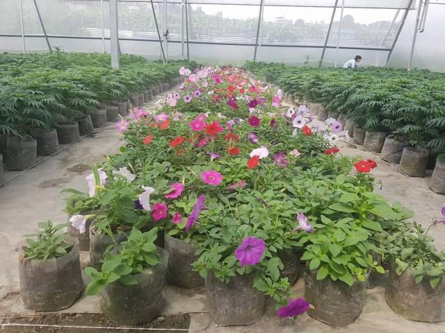 hi-tech greenhouse