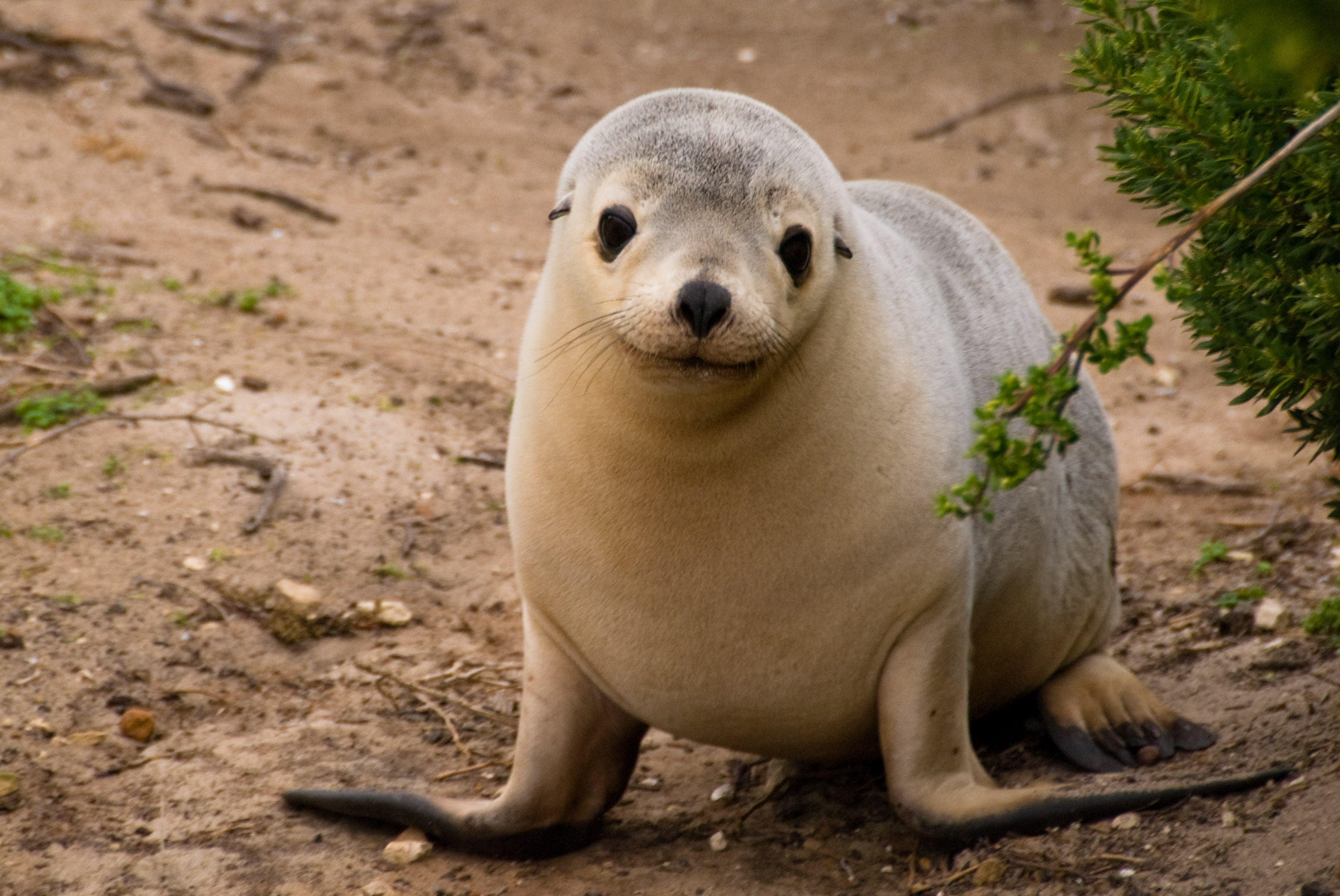 Animals  Gabriele And Steve's Travel Blog