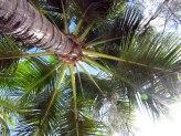 Plage de l'Anse Vata - Jean-Palme le palmier