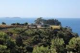 auckland_waiheke_island_2065