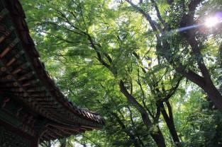 Séoul - Secret Garden