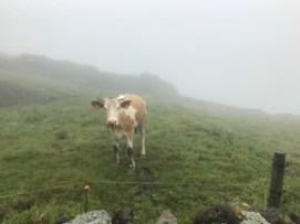 Corvo pastures. Foto: gloriacondal
