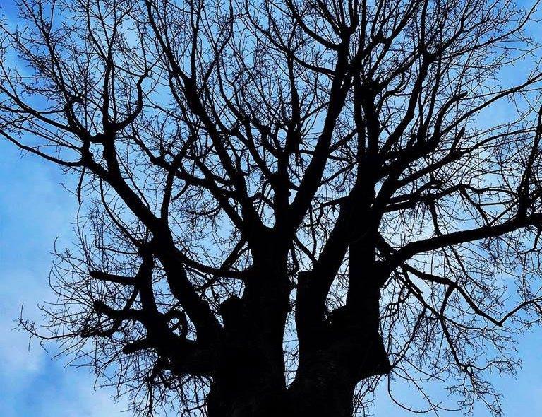 Wintertime Tree