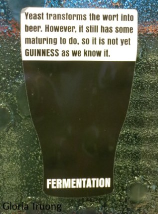 DB - Guinness 24