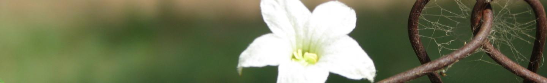 cropped-8.jpg