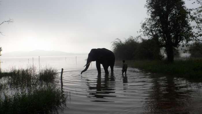 Sakrebyle Elephant camp in shimoga