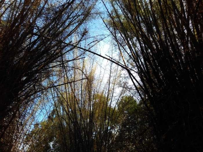 kuruvampatti zoo near Yercaurd foothills near Salem