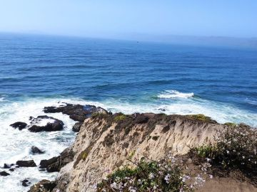 Tomales point at point reyes california