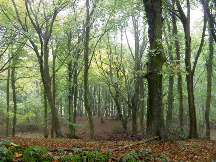 Standish Wood, Glos.