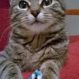 Małe kociaki szukają domu