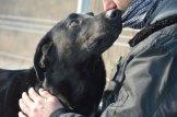 ilaj pies do adopcji poznan (3)