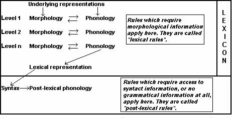 application structure diagram fox skeleton what is a lexical phonology | sil glossary of linguistic terms