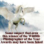 Alleged Faked Photographs Challenge Credibility Of Wildlife Photographer Of The Year Awards