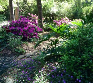 The azaleas and lantana hold up their pink and purple faces to the sun.