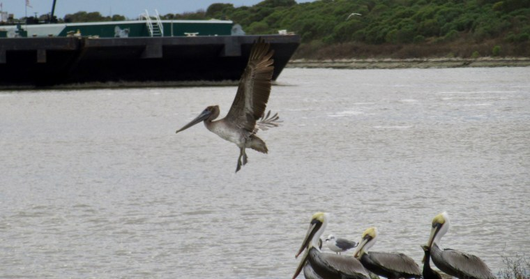 More Winter in Southeast Texas: Birds in Gilchrist