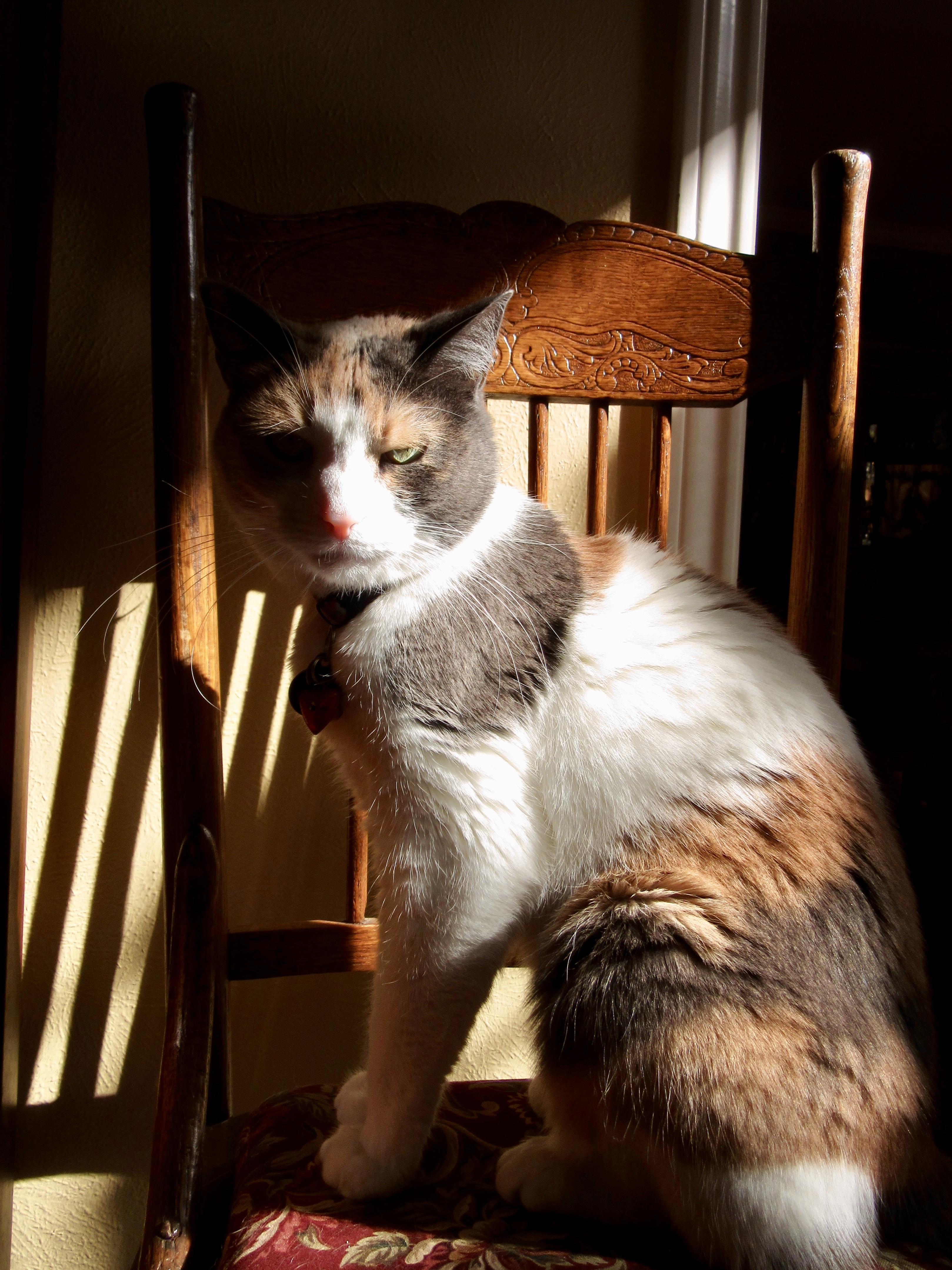 Two Cat Haiku: Made Thoughtful by Sunlight
