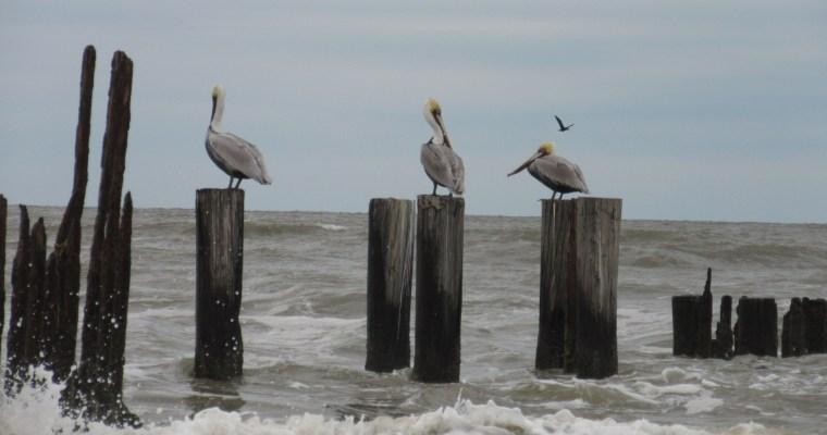 Haiku: Gulf Coast in Winter