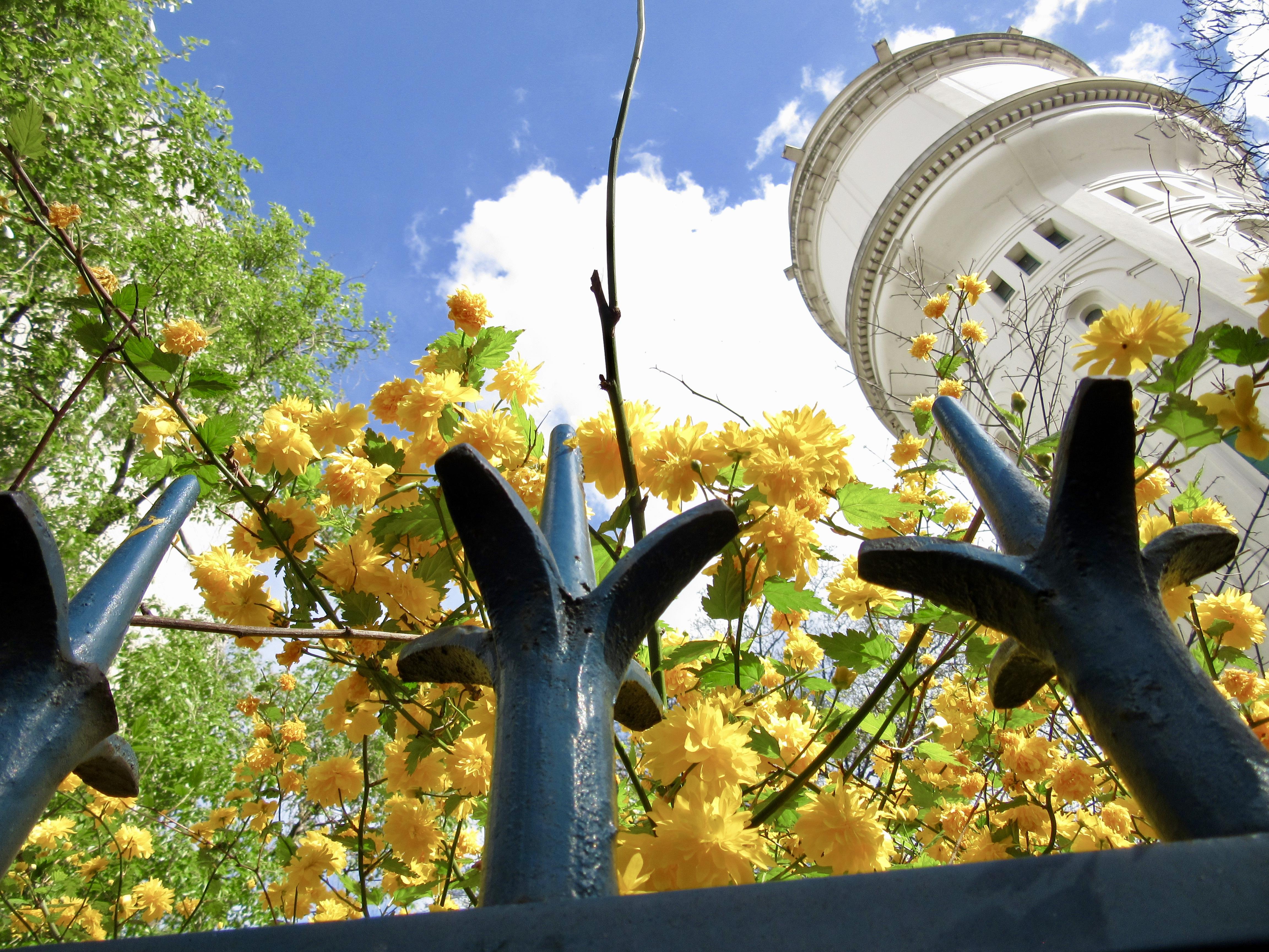 Photo: Looking Up in Montmartre