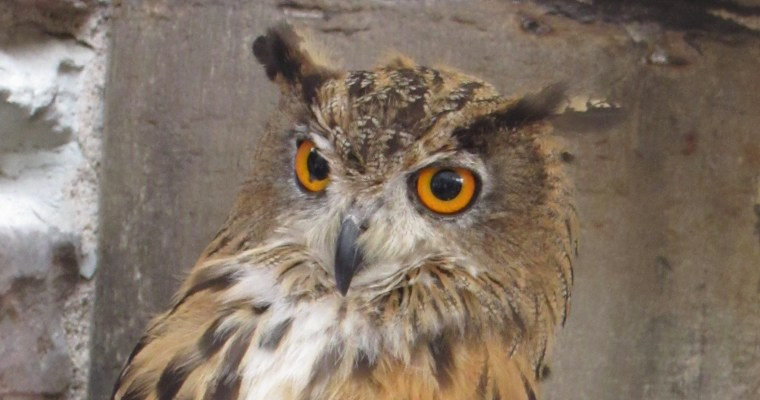 It's Owl-Right (plus a haiku)