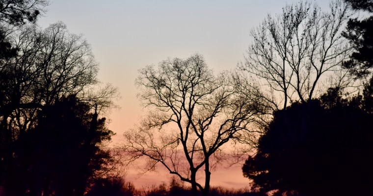 Cameras and Trees and Sunsets – Oh My!