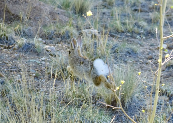 Bunny Rabbit, Mid-Hop