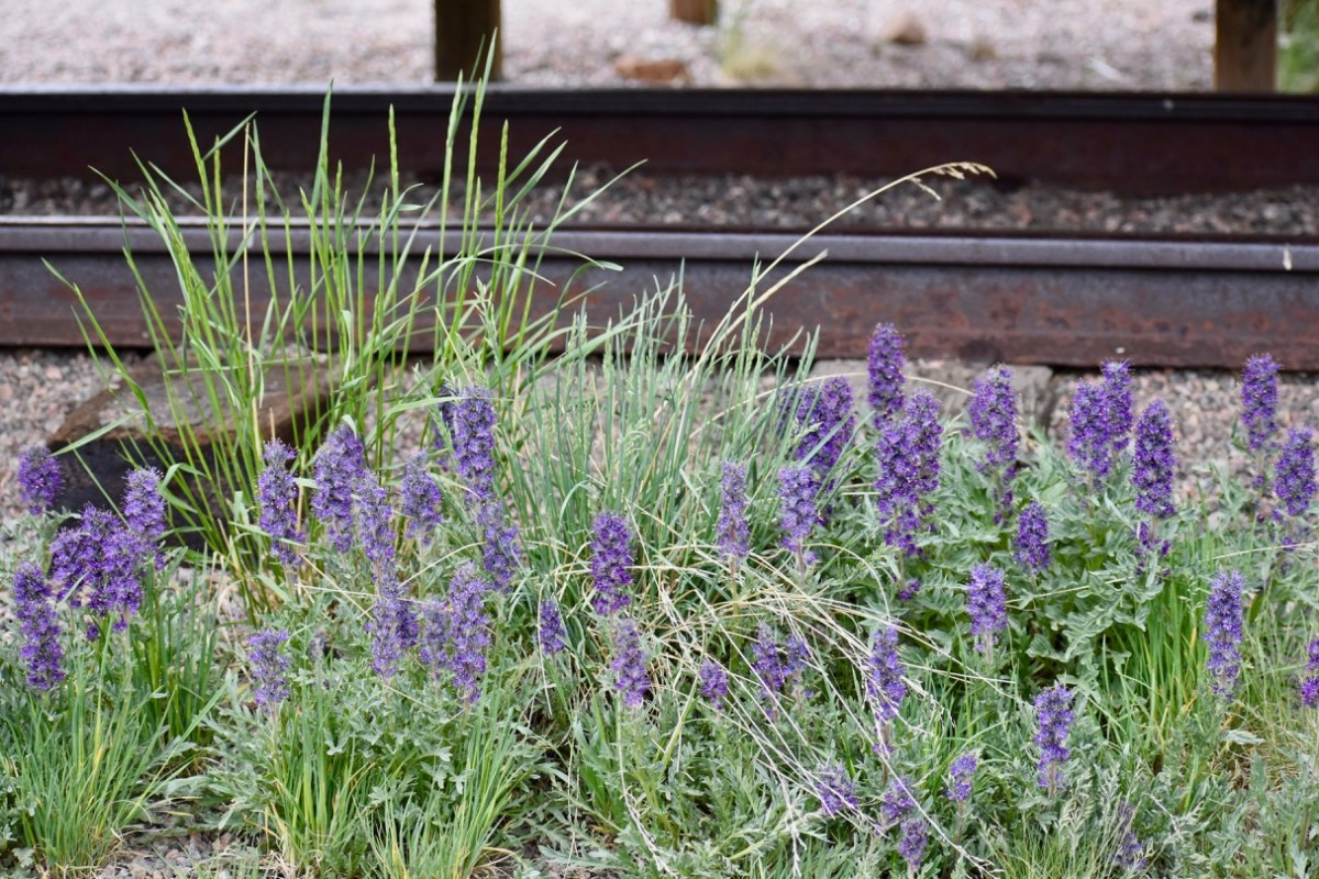 Railroad and Wildflowers.jpg
