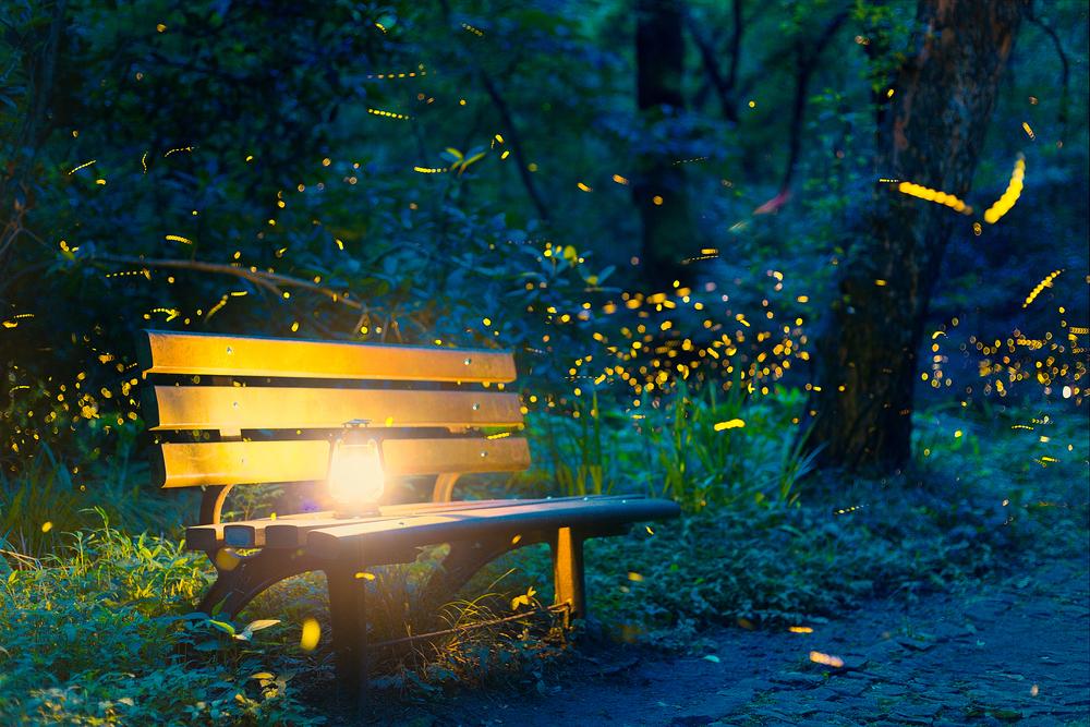 Haiku: Summer Reminiscence