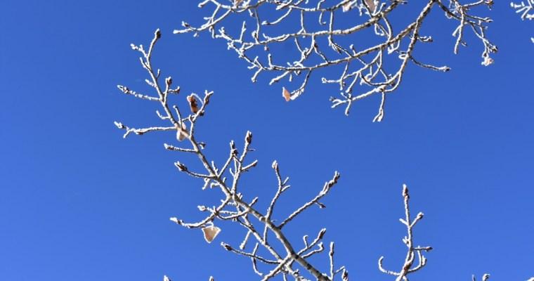 Haiku: Icy Aspens