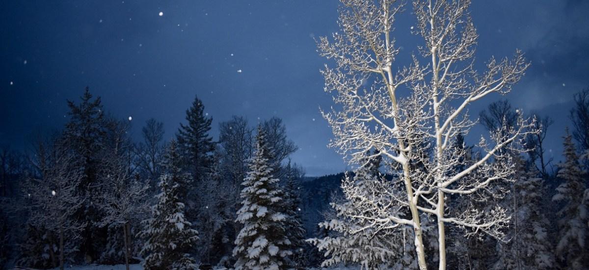 Camera Flash on Snow