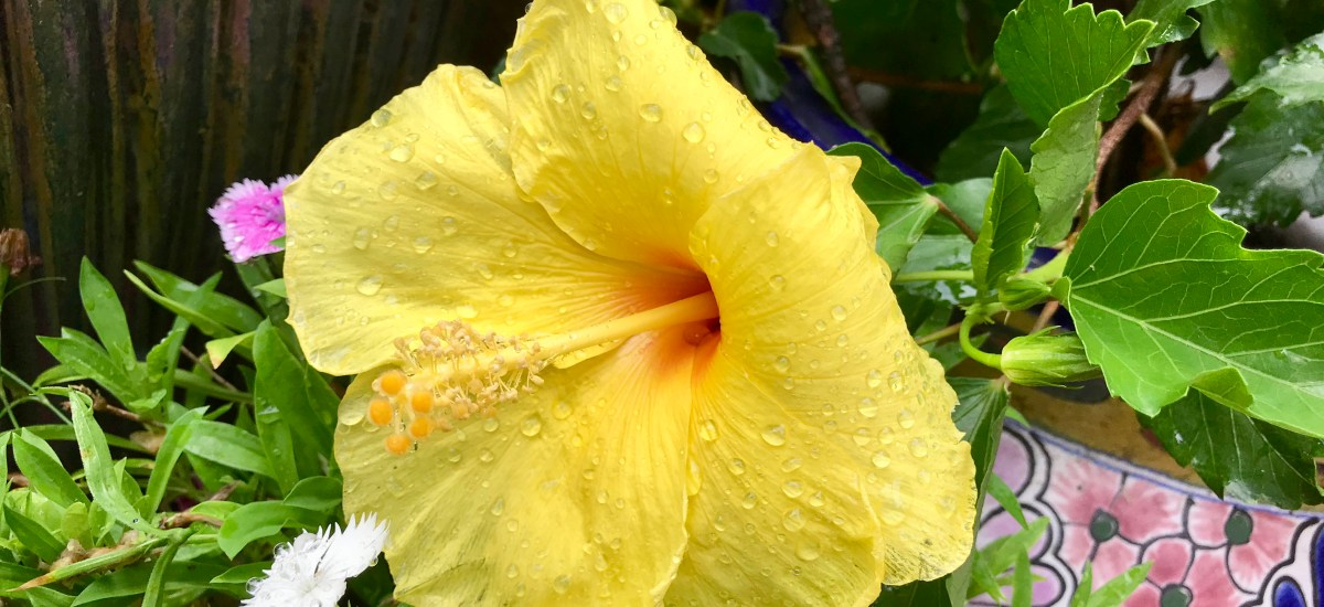 After the Rain, I Hear Flowers (a poem)