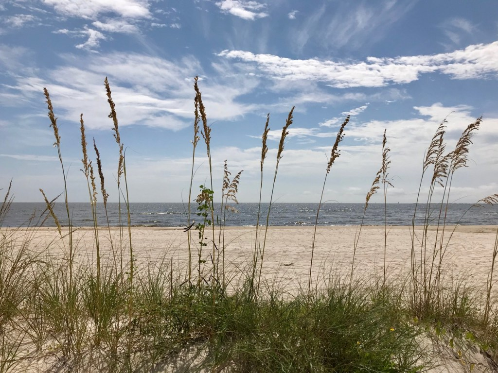 Beach grasses, sand and sky