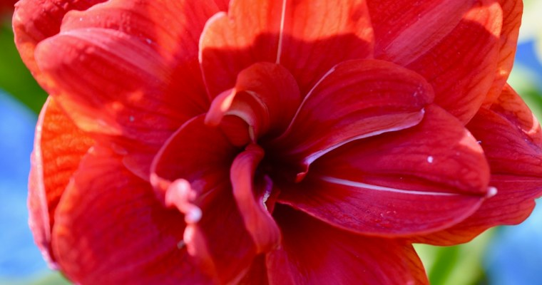 The Forgiveness of the Yard, January Blooms and a New Camera Lens, Oh My!