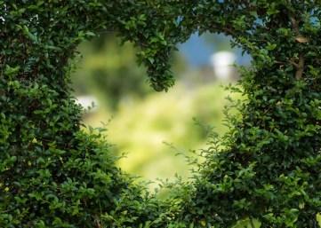 heart-1192662_600 dpi