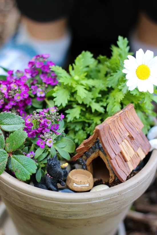 Whimsical Mini Flower Gardens
