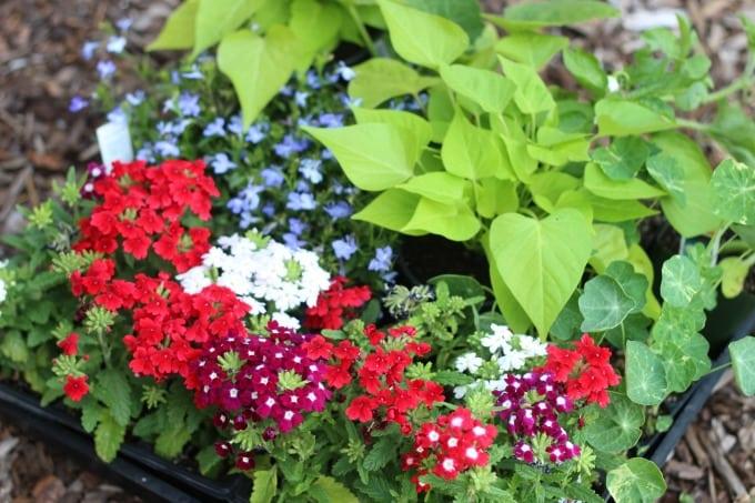 Patriotic Flower Planter