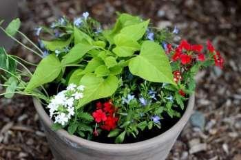 Patriotic Flower Planters