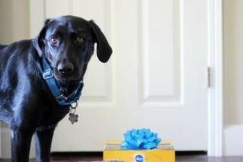 How Do You Celebrate A Dog's Birthday?