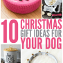 10 Christmas Gift Ideas For Your Dog Glue Sticks And