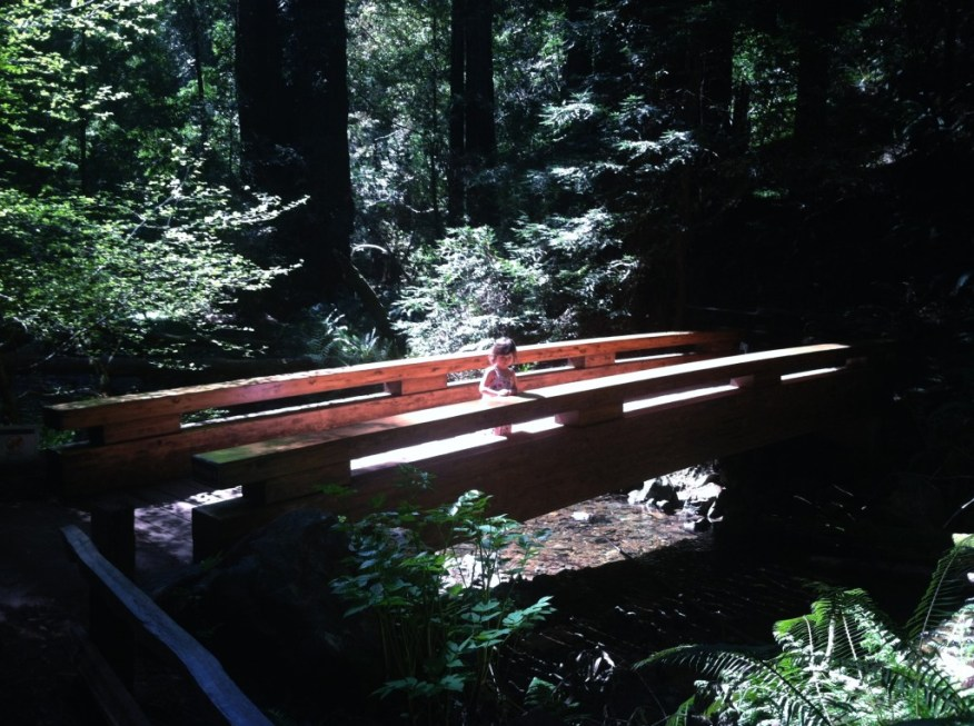 time in the redwoods on the bridge