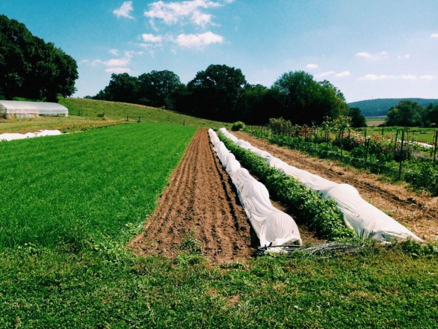 farms- Pennsylvania farm